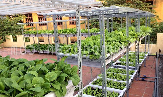 Kệ có thể dùng để trồng rau hoặc trồng cây